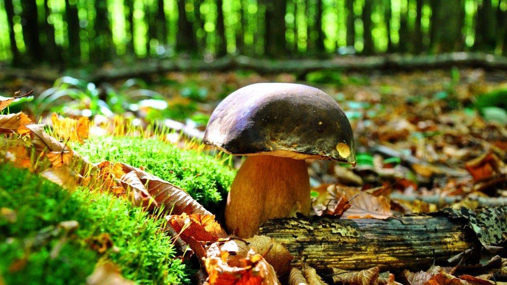 pixabay-autunno (2)